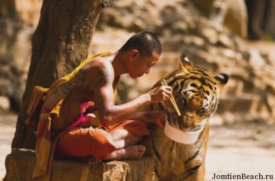 тайланд храм тигров