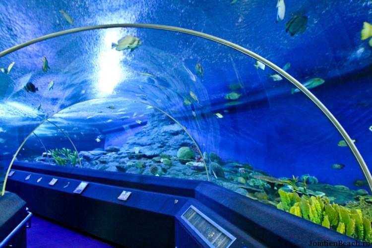 паттайя океанариум