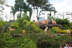 парк тигров паттайя