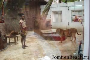 тигриная ферма паттайя