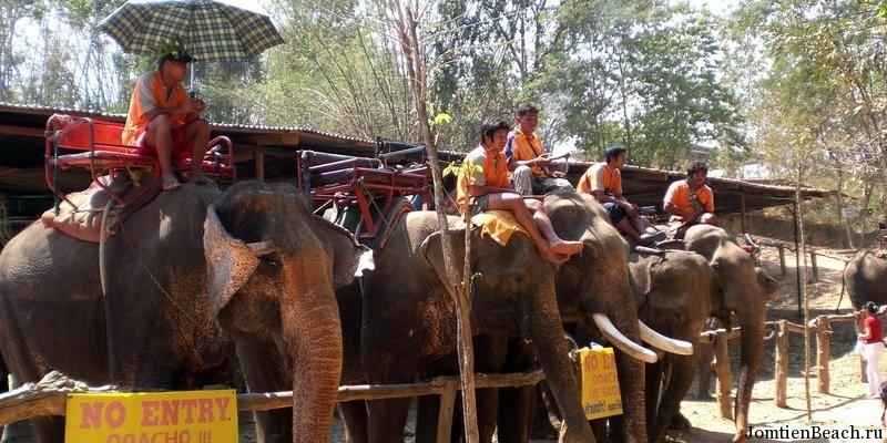 деревня слонов паттайя