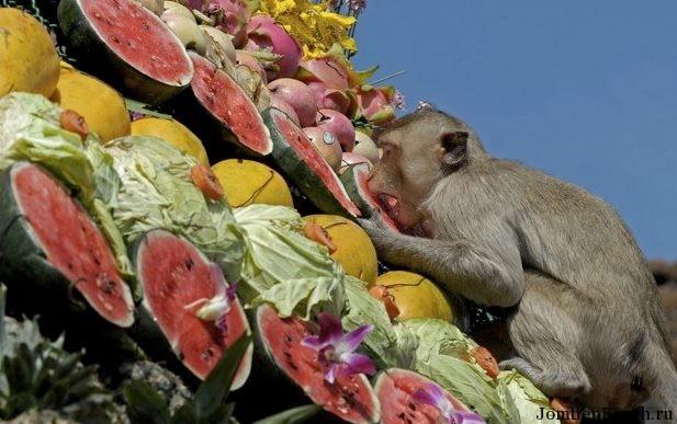 фестиваль обезьян