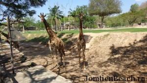 паттайя зоопарк