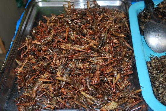 insects food pattaya