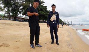 медузы на пляже джомтиен