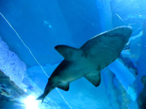 акулы в таиланде