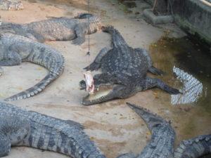 парк в паттайе с крокодилами